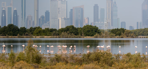Pink flamingos in the background of a megacity