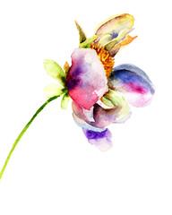 Original flower illustration
