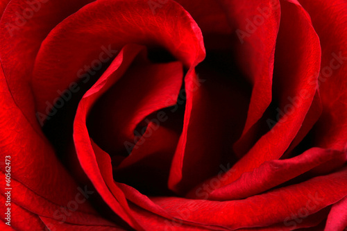 canvas print picture Rose Nahaufname