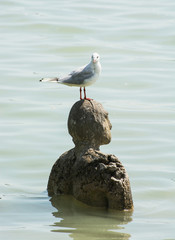 Sea-gull and statue in water