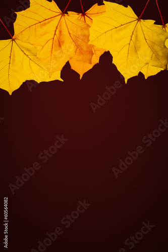canvas print picture Autumn / Fall wallpaper with glowing leaves