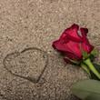 canvas print picture - Rosa rossa