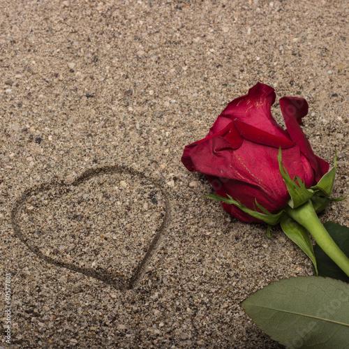 canvas print picture Rosa rossa