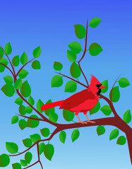 Red Cardinal in a Summer Tree