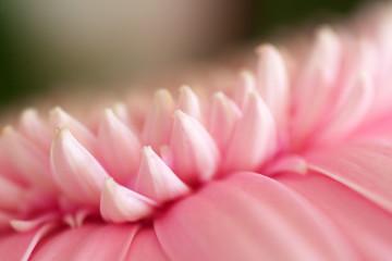 Beautiful blooming pink flower