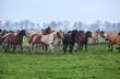 horses herd on misty pasture