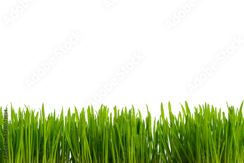 canvas print picture Gras