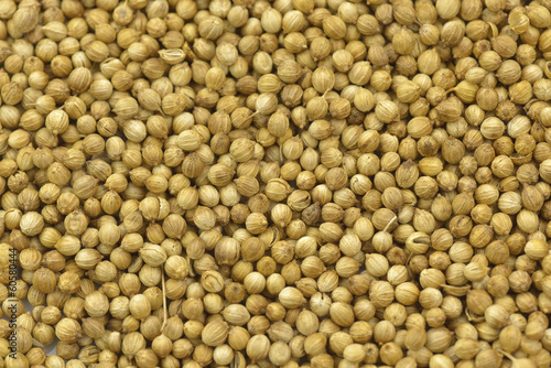 coriander seeds isolated