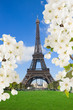 Eiffel Tower with  blossoming tree, France