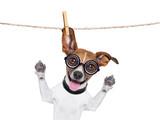 dumb crazy dog