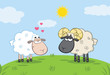 White Sheep In Love With Ram Sheep On A Meadow