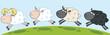 White Ram Sheep Leading Three Sheep
