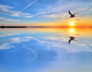 gabiota en el lago azul