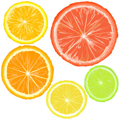 Realistic citrics, set of fruit slices