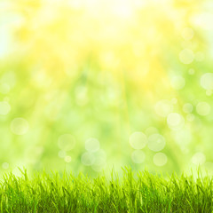 Green grass over sunlight