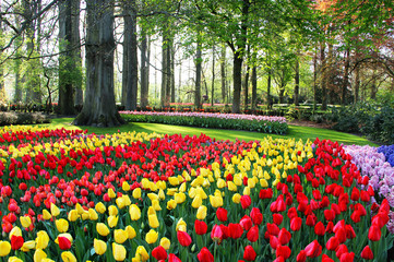 Mix of Holland tulips and hyacinths