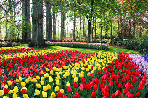 Poster Tulp Mix of Holland tulips and hyacinths