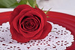 Close up one red rose on a red plate and white doily