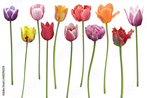 Foto op Plexiglas Lente Tulips Flowers In A Row