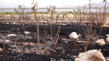 Burned Scarred Land Dolly