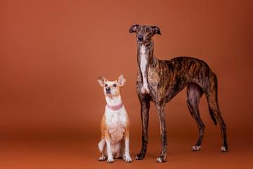 Hundefreunde im Studio