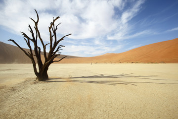 Dead Tree in Deadvlei