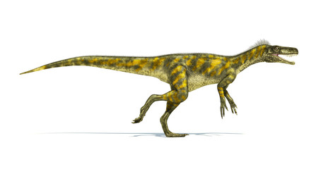Herrerasaurus dinosaur, photorealistic representation. Side view