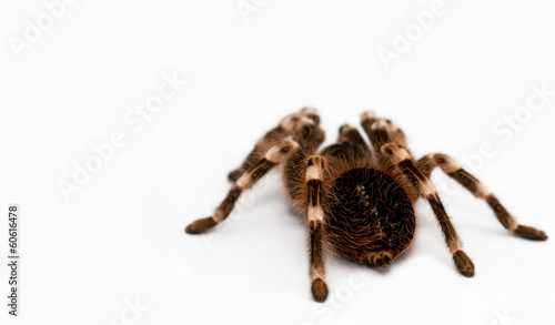 beautiful spider