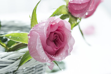 Pink Roses in the basket after rain