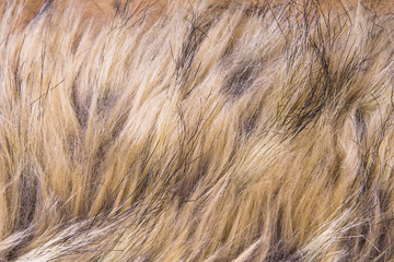 Brown artificial fur for background