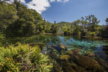 View of Te Waikoropupu Springs at New Zealand's South Island.