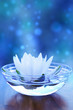 white water lilly flower over blue