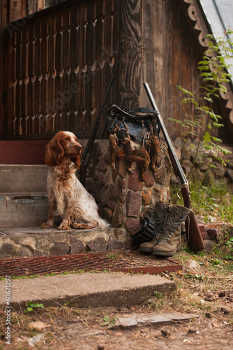 Gun dog near to shot-gun and trophies, vertical, outdoors