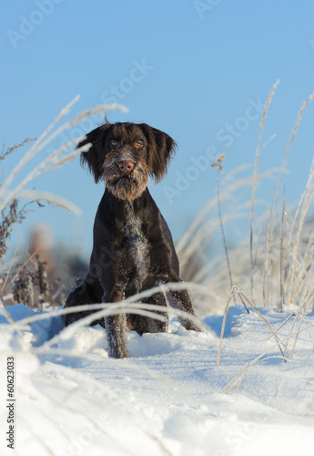 The brown dog sits on snow against the sky, vertical