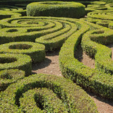 ornamental cut boxwood garden in Bagnaia, Villa Lante, Viterbo