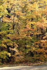 autunno in foresta foglie gialle