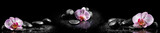 Fototapety Horizontal panorama with pink orchids and zen stones on black ba