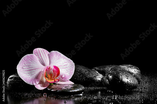 Orchid flower with zen stones on black background|60629825