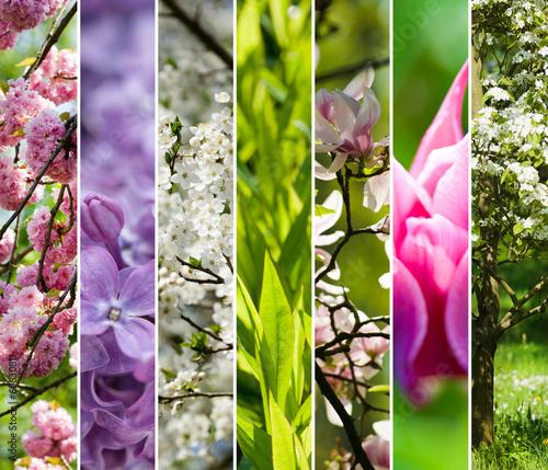 canvas print picture Farben des Frühlings