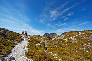Hikers reaching the summit of a ridge with Cradle Mountain in ba