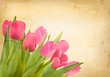 Valentine's day background. Beautiful tulip flowers on vintage t