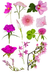 set of twelve pink color flowers on white