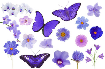 set of violet color butterflies and flowers isolated on white