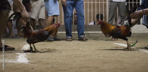 Foto op Canvas Kip cock fight