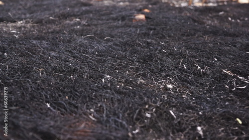 Environmental Burned Grass Dolly