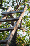 accommodation ladder to fruit tree in green garden poster