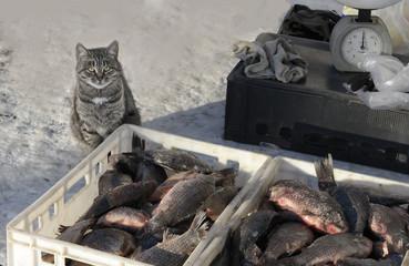 кошка-продавец рыбы