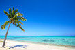 Paradise beach and palm tree  in tropical island - 60645814