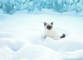 Cat sitting in snow in winter