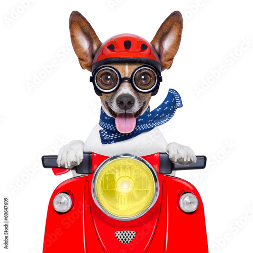 crazy silly motorbike dog